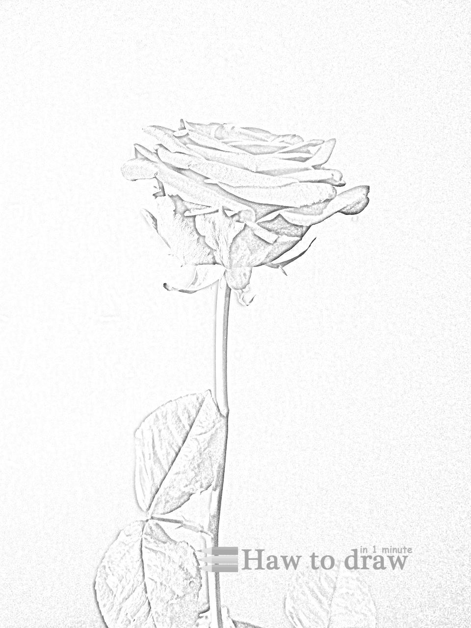 drawings of roses 6