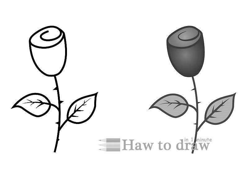 how to draw a rose with pencil 11