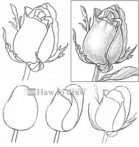 how to draw a rose with pencil 13