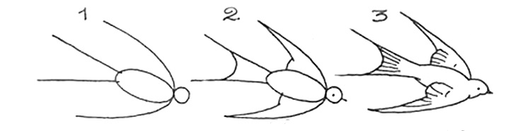 How to draw a bird drawings of swallow 2