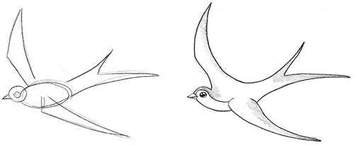 How to draw a bird drawings of swallow 3