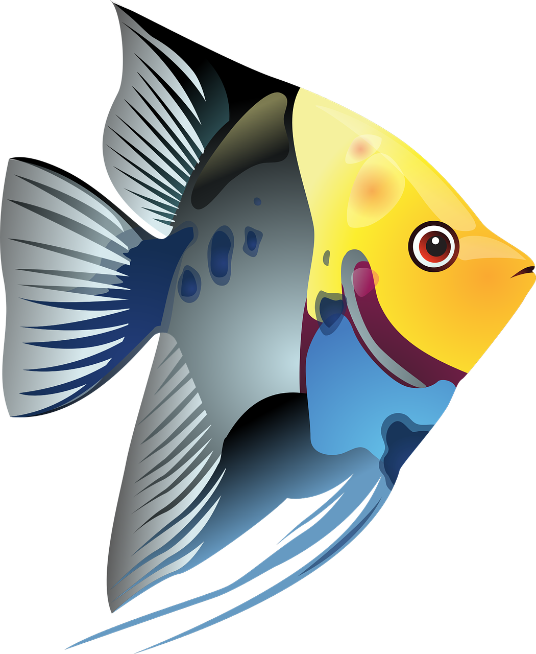 How to draw a fish - the best 5