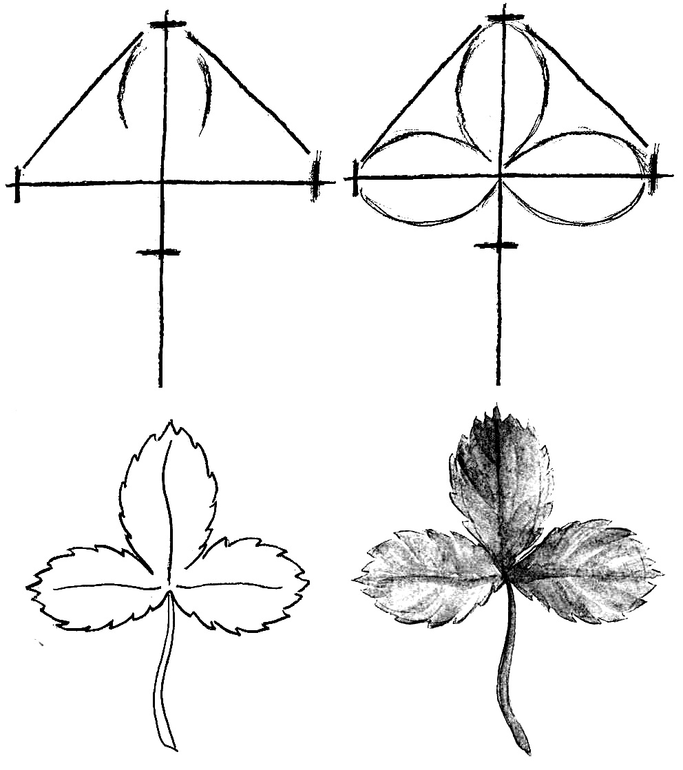 How to draw a leaf step by step 1 (1)