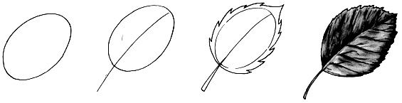 How to draw a leaf step by step 1 (9)