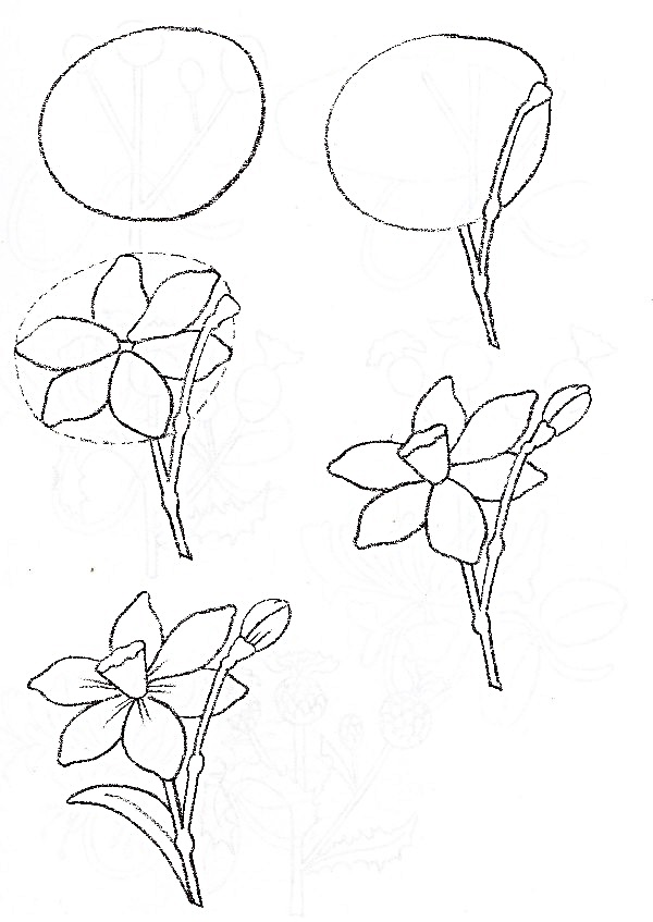 Wildflowers drawing 12