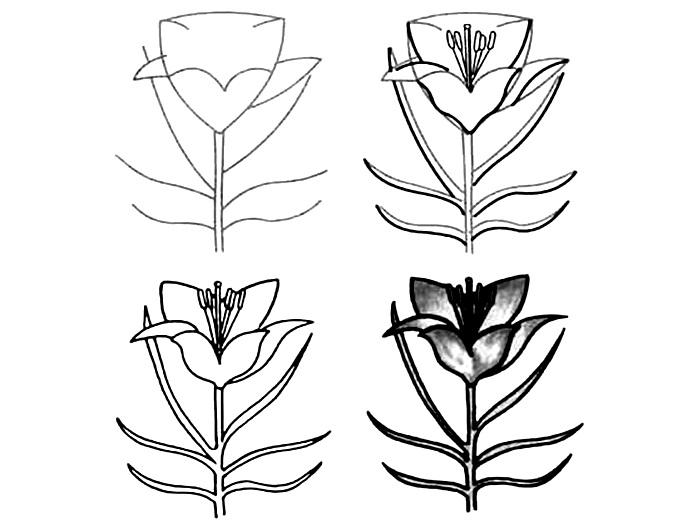Wildflowers drawing 14