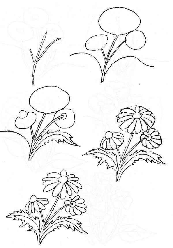 Wildflowers drawing 17