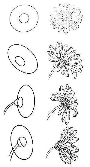 Wildflowers drawing 18