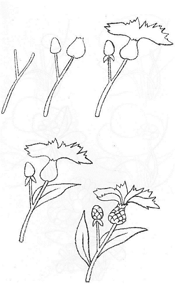 Wildflowers drawing 6