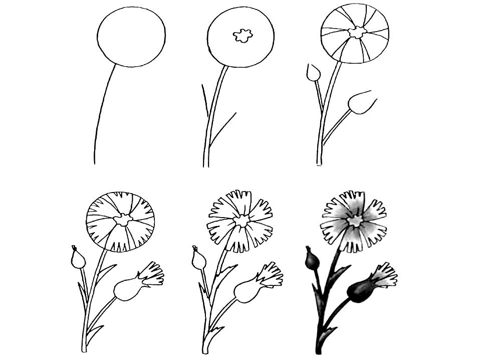 Wildflowers drawing 9