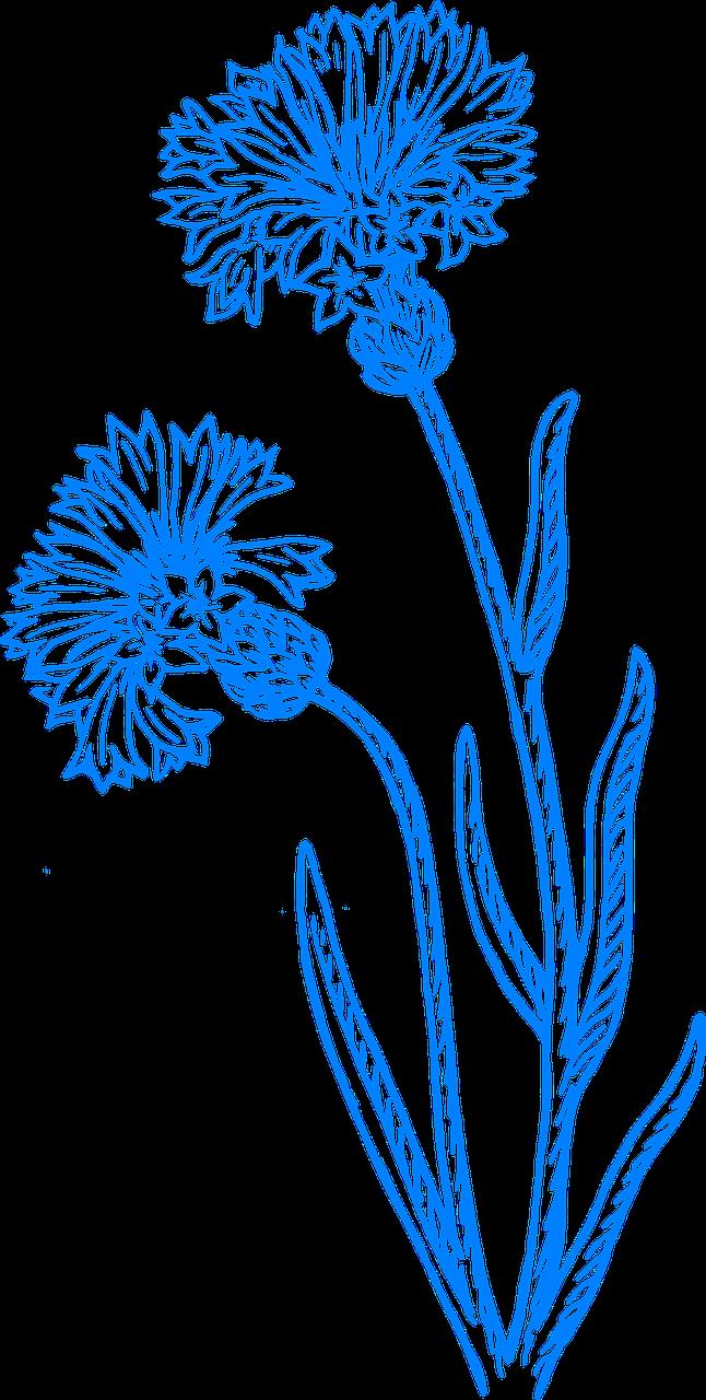 Wildflowers drawing - stencils 18