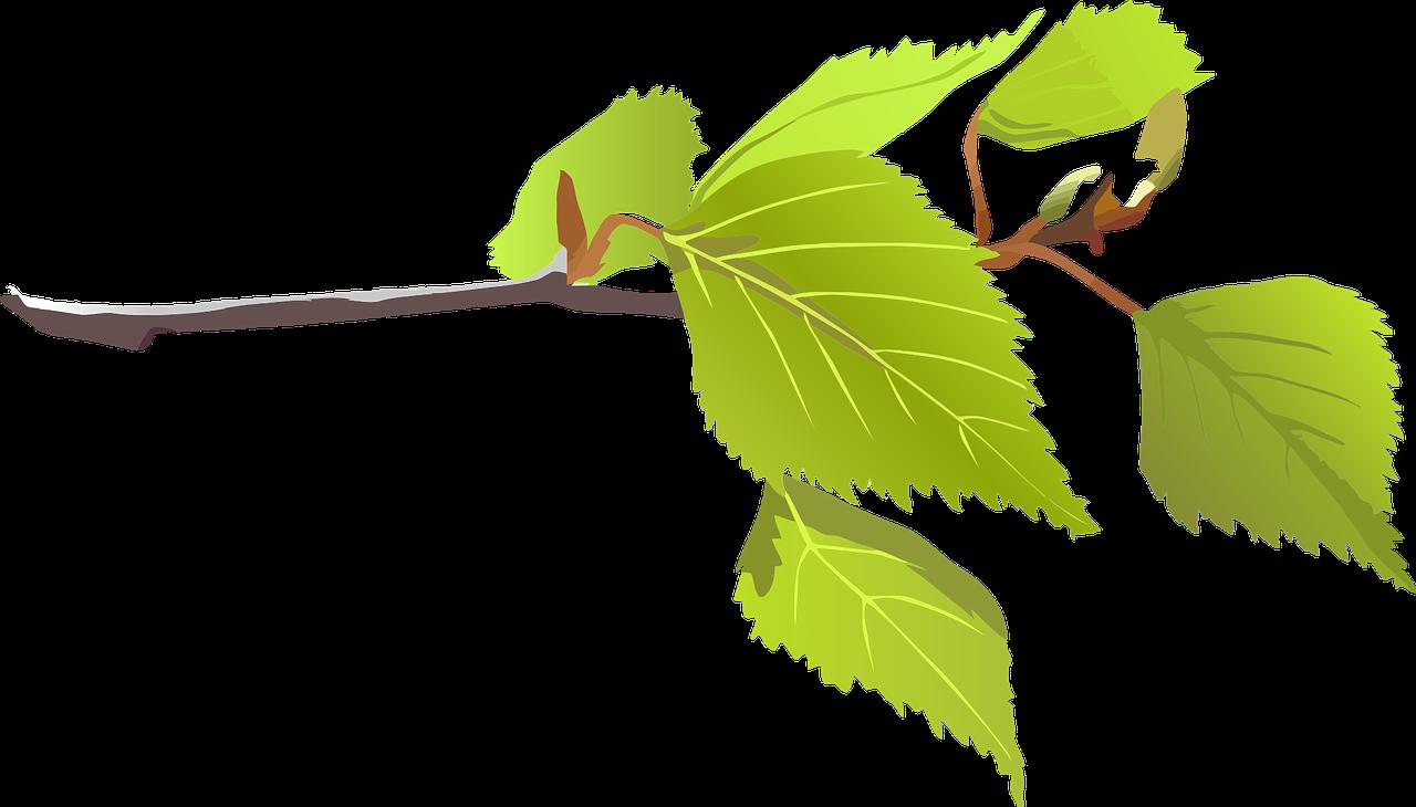 how to draw a birch 2