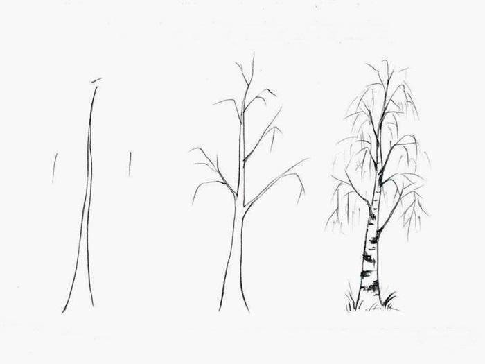 how to draw a birch tree 3
