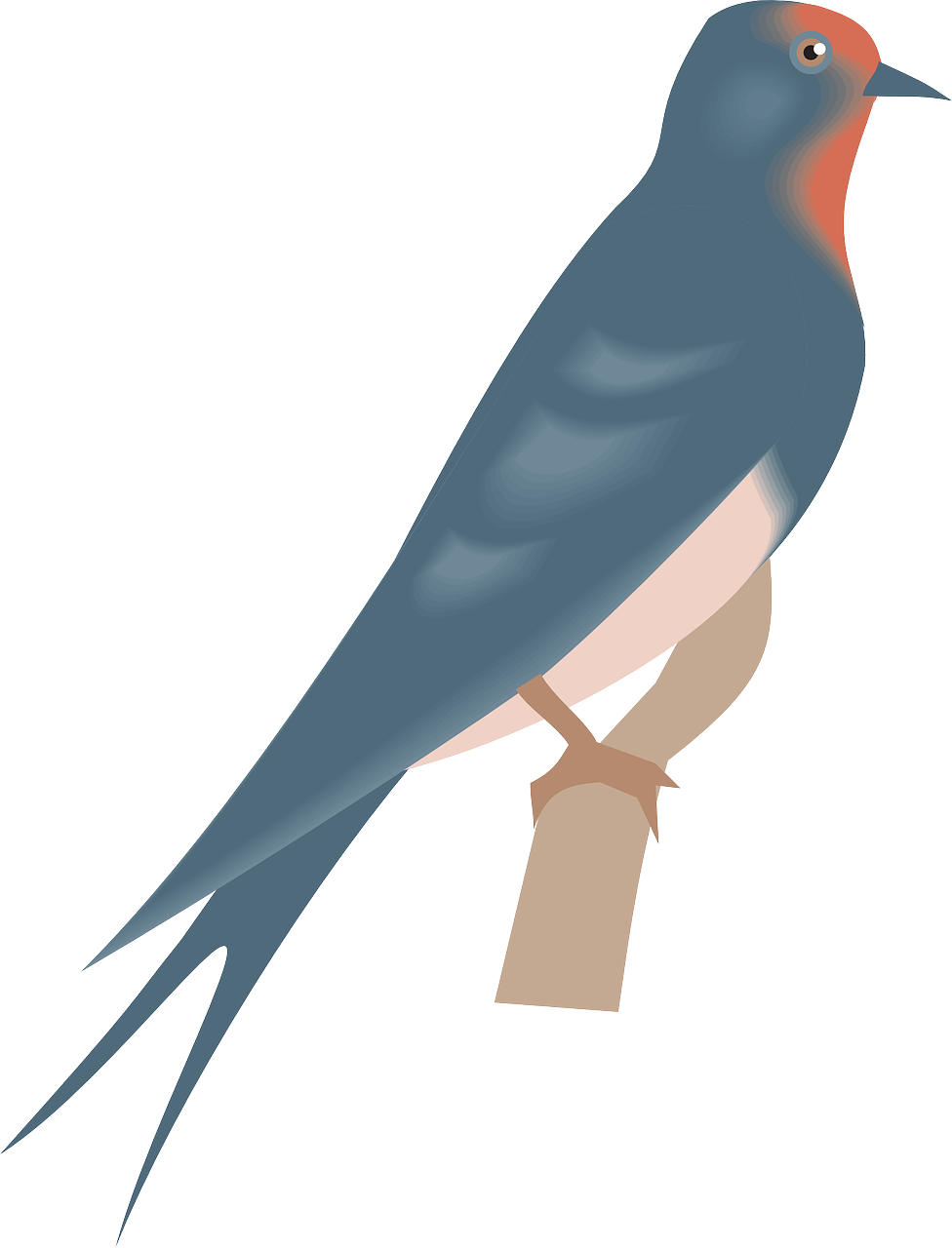 how to draw a bird, how to draw a swallow 6