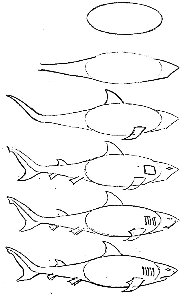 how to draw a fish 22