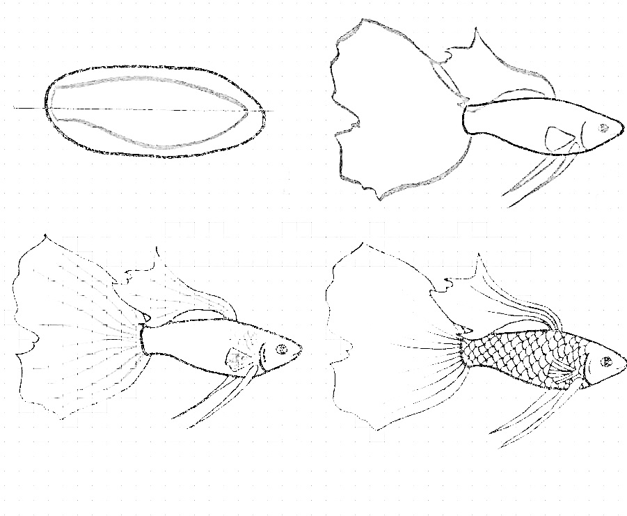 how to draw a fish 29
