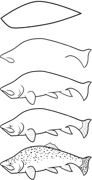 how to draw a fish 47