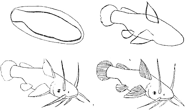 how to draw a fish 63