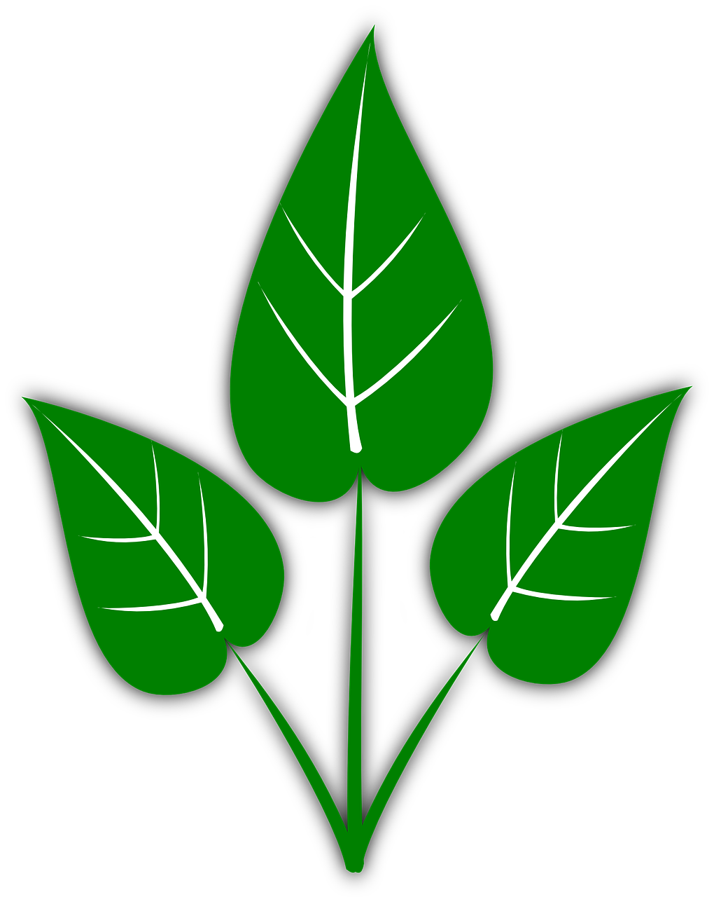 how to draw a leaf 12