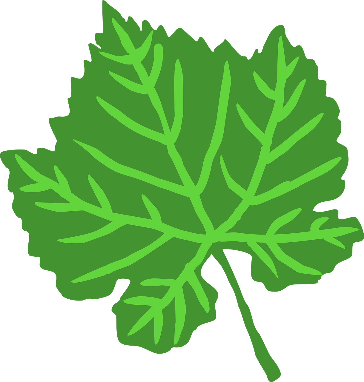 how to draw a leaf 14