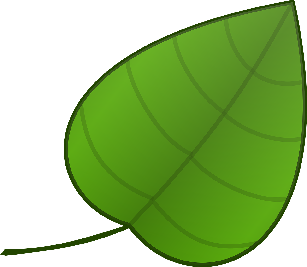 how to draw a leaf 15