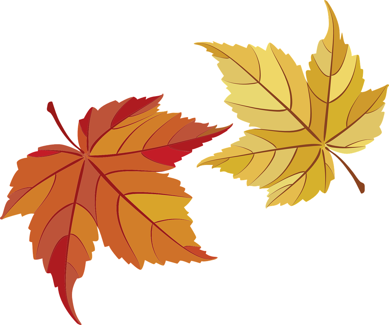 how to draw a leaf 16