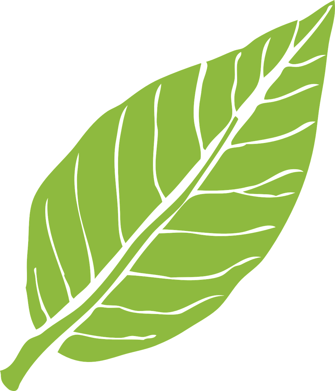 how to draw a leaf 17