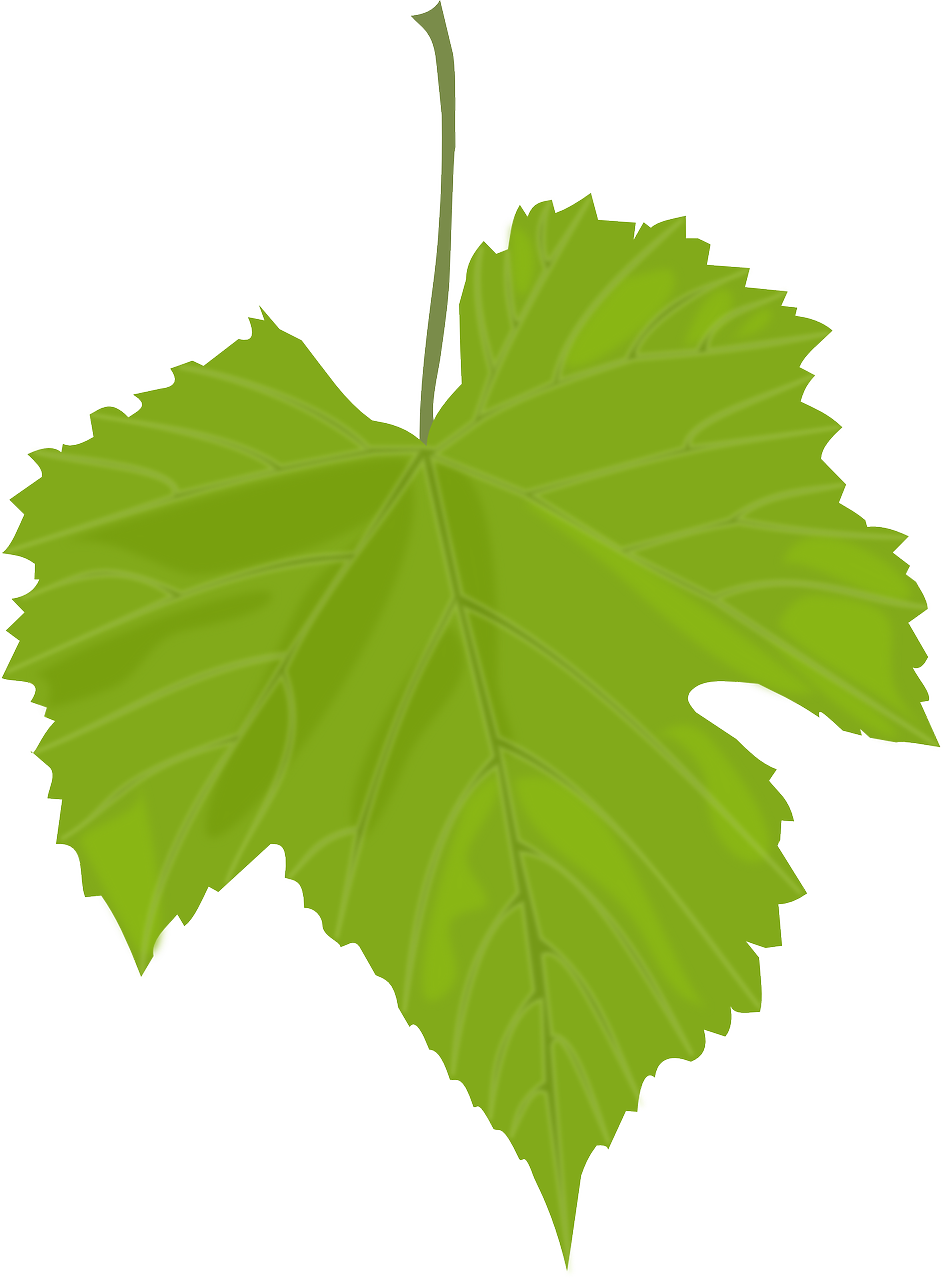 how to draw a leaf 2