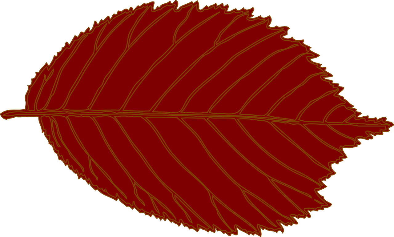 how to draw a leaf 20