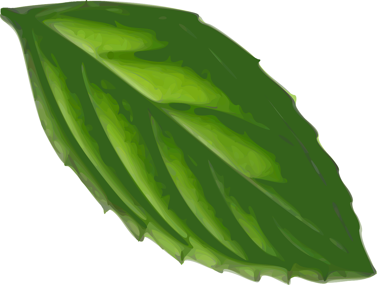 how to draw a leaf 21