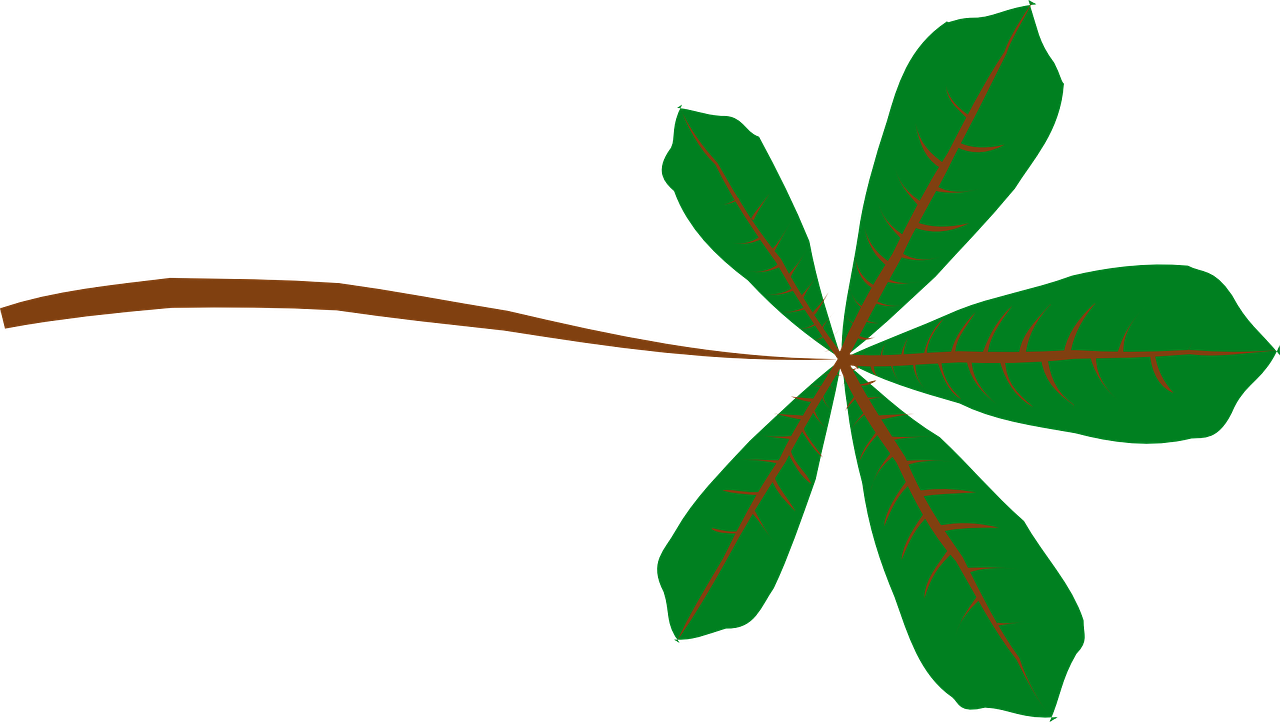 how to draw a leaf 22