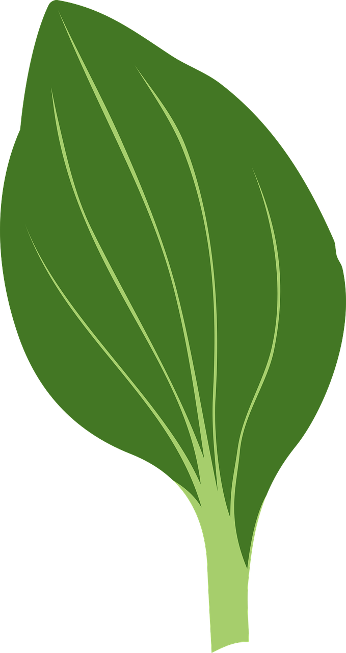 how to draw a leaf 6