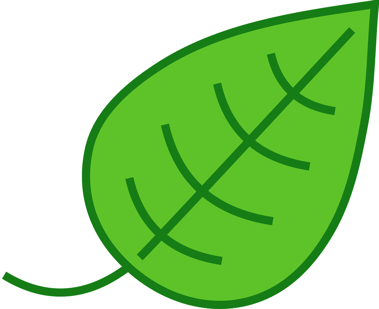 how to draw a leaf 7