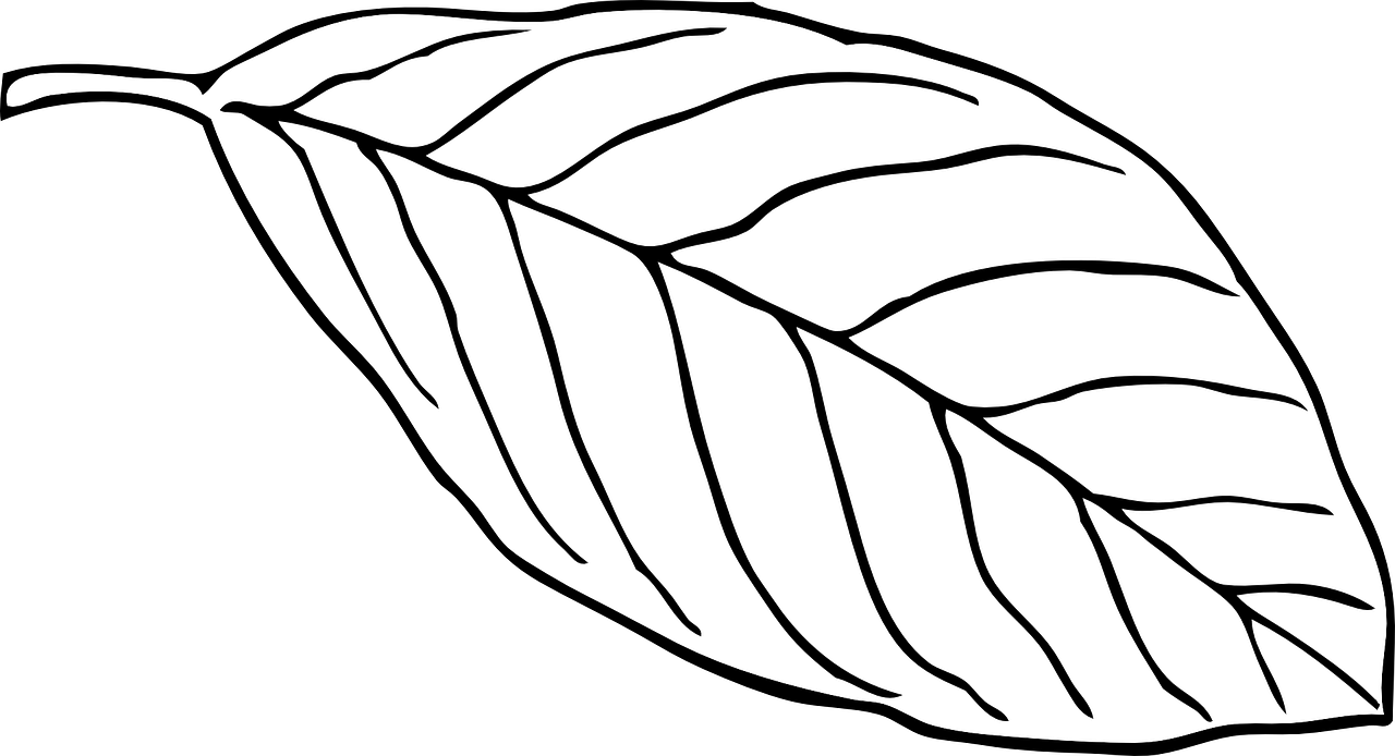 how to draw a leaf free printable leaf coloring pages 4