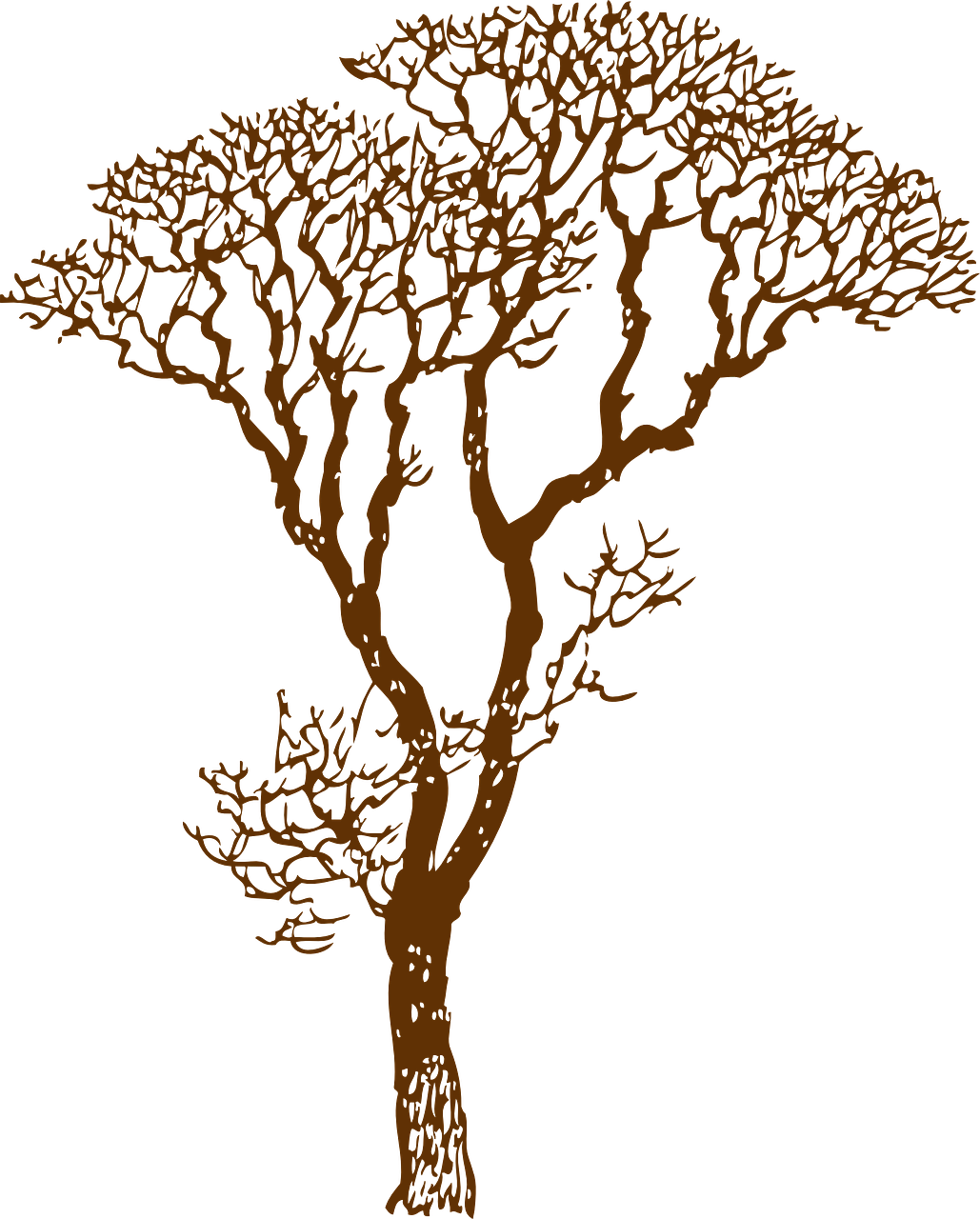 how to draw a tree, stencil 4