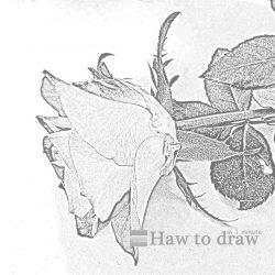 drawings of roses 15