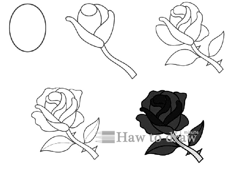 how to draw a rose with pencil 1