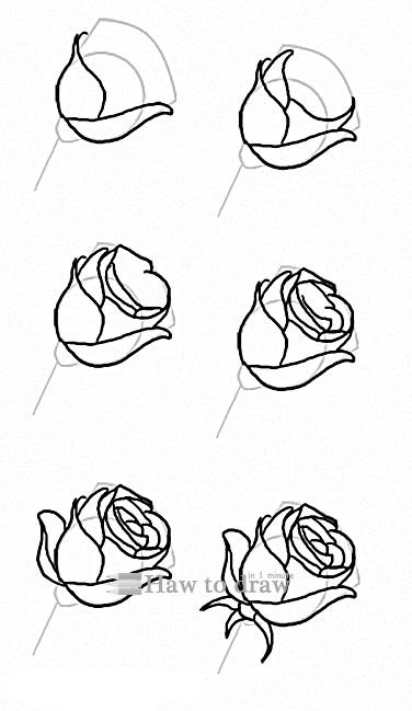 how to draw a rose with pencil 14