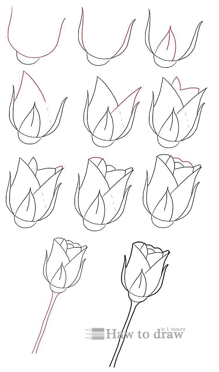 how to draw a rose with pencil 4