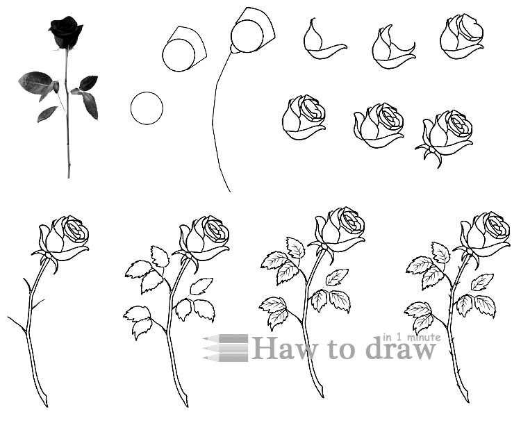 how to draw a rose with pencil 8