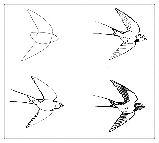 How to draw a bird drawings of swallow 1