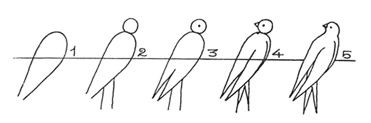 How to draw a bird drawings of swallow 2,4