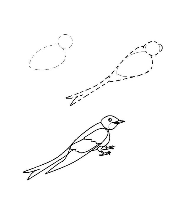 How to draw a bird drawings of swallow 4