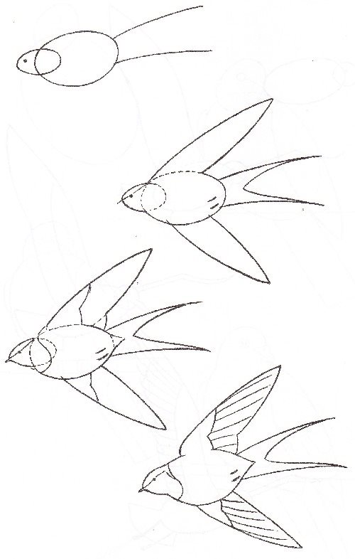 How to draw a bird drawings of swallow 6