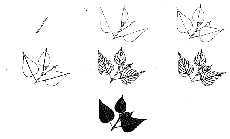 How to draw a leaf step by step 1 (2)