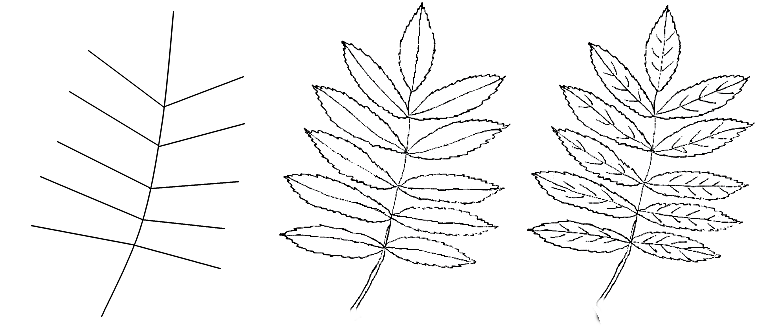 How to draw a leaf step by step 1 (3)