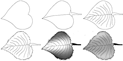 How to draw a leaf step by step 1 (4)