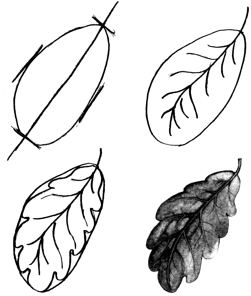 How to draw a leaf step by step 1 (8)