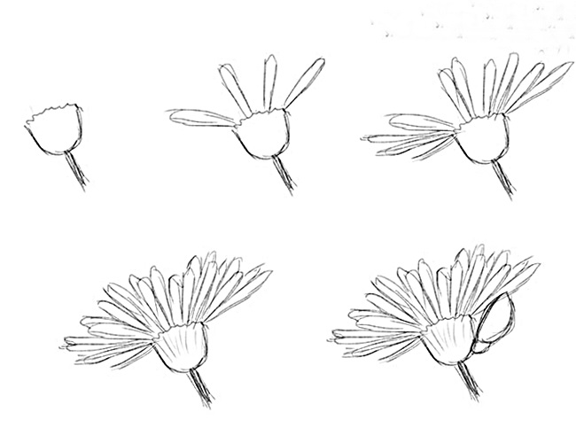 Wildflowers drawing 1