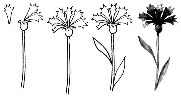 Wildflowers drawing 4